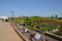 MERSIN - Antalya Orman Fidanlığında Satış Ofisi Açıldı
