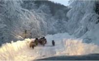 ORMANA - Aracın Önüne Domuz Sürüsü Çıktı
