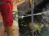 DENİZ KAPLUMBAĞALARI - Balıkçı Barınağında Kaplumbağa Operasyonu