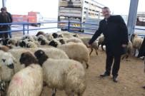 KEREM SÜLEYMAN YÜKSEL - Niğde'de 11 Aileye 440 Koyun Dağıtıldı
