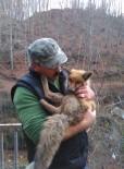 Aç Kalan Tilki, Belediyeye Sığındı