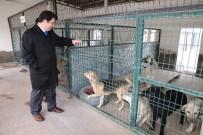 Aksaray Belediyesi Sokak Hayvanlarını Unutmadı