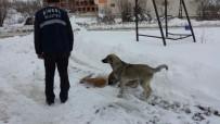 Bingöl Belediyesi Sokak Hayvanları İçin Doğaya Yem Bıraktı