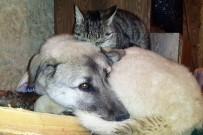 Kedi İle Köpeklerin Anlamlı Dostluğu