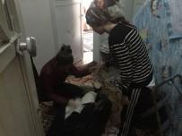 HAYVAN HAKLARı FEDERASYONU - Ses Sanatçısı Mevsim Aral'dan Kadınlara Yardım