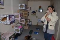HAYVAN HAKLARı FEDERASYONU - Sibirya Soğuklarına Karşı Beş Yıldızlı Kedi Evi