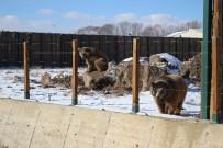 MEHMET AKBAŞ - Anadolu Harikalar Diyarı'ndaki Hayvanlara Özel Isıtma