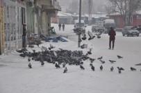HALITPAŞA - Her Sabah Kuşları Doyuruyorlar