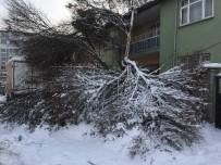 HAYDAR ALİYEV - Kar Yağışı Ağaçların Kırılmasına Neden Oldu