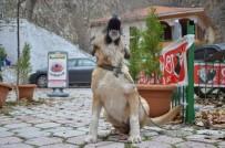 Soma'da Kuduz Endişesi
