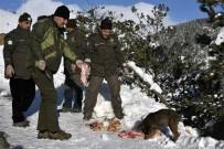 ZIGANA - Gümüşhane'de Sokak Hayvanları Ve Yaban Hayatı Unutulmuyor