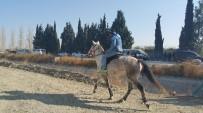SÜLEYMAN KAHRAMAN - Söke'de Geleneksel Rahvan At Yarışları Yapıldı
