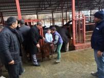 GIDA TARIM VE HAYVANCILIK BAKANLIĞI - Adilcevaz'da Genç Çiftçilere Hibe Koyun Desteği