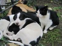 HAYVAN HAKLARı FEDERASYONU - Çocuklara 'Sokak Hayvanlarını Koruma Bilinci' Anlatılacak