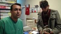 ÜÇPıNAR - Yaralı Kartalı Beşiktaş Taraftarı Kurtardı