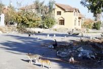YAVRU KEDİ - Kentsel Dönüşüm Kedilerinin Yaşam Mücadelesi