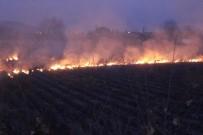 UMURLU - Kış Ortasında Arazi Yangını