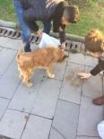 SOKAK HAYVANI - Üniversite Öğrencileri Sokak Hayvanlarına Yem Bıraktı