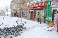 KAR ÖRTÜSÜ - Bozüyük'te Kuşlar İçin Yem Bırakıldı