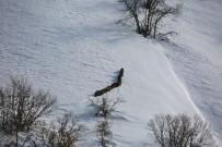 SOKAK KÖPEĞİ - Kar Yağışı Ve Dondurucu Soğuklar Yaban Hayvanlarını Da Etkiliyor