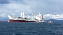 PANAMA - Kayalıklara Oturan Gemiden Yakıt Sızdı, Deniz Canlıları Kıyıya Vurdu