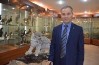 KÖTÜLÜK - Prof. Dr. Başkaya Açıklaması 'Kış Mevsiminde Yabani Hayvanların Yemlenmesi Devlet Kontrolünde Yapılmalı'