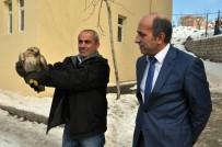 BEYTÜŞŞEBAP - Şırnak'ta Yaralı Kızıl Şahin Bulundu