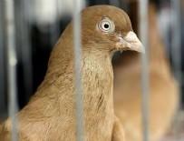 AÇIK ARTIRMA - 'Güvercin Mezadı'nın geliri Haleplilere