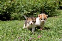 KARŞIYAKA BELEDİYESİ - Karşıyaka Ve Buca'da Sokak Hayvanlarına Sahip Çıkan Projeler