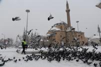 SIĞIRCIK - Konya Büyükşehir Belediyesi Kuşlara Ve Sahipsiz Hayvanlara Yem Bırakıyor
