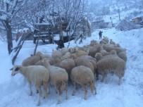 YARDIM TALEBİ - Alanya'da Mahsur Kalan Küçükbaş Hayvanlar Kurtarıldı