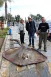 GÖKOVA - Gökova Körfezi'nde 200 kiloluk vatoz yakalandı