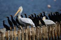 KUŞ CENNETİ - Kuş Cenneti Safarisinde Ödüller Sahiplerini Buldu