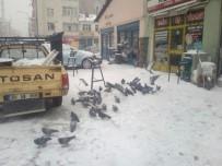 DONMA TEHLİKESİ - Soğuk Hava Ve Kar Nedeniyle Kuşlar Yiyecek Bulamıyor