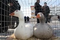 BOZOK ÜNIVERSITESI - Yozgat'ta İlk Kez Kaz Günü Etkinliği Düzenlendi