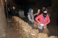 SOĞUK HAVA DEPOSU - Sandıklı'da Üretilip Depolanan Patateslerin Sevkiyatı Başladı