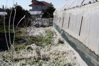 ERKEN UYARI - Aydın'da Zirai Don Ve Buzlanma Riskine Dikkat