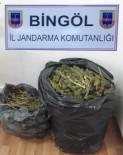 Bingöl'de 16 Kilo Esrar Ele Geçirildi
