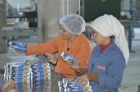 KADIN İSTİHDAMI - Bu Fabrikada Çalışanların Yüzde 80'İ Kadın