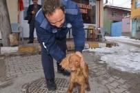 HAYVAN BAKIM EVİ - Günyüzü Belediyesi Sokak Hayvanlarına Sahip Çıkıyor