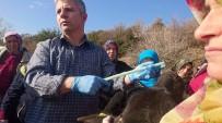 İŞ KAZASI - Köylü Kadınlara Süt Sığırcılığı Ve Sürü Yönetimi Kursu