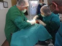 HAYVAN SEVERLER - Sokak Köpeğine Tümör Ameliyatı