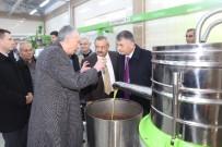 ERSIN YAZıCı - Vali Yazıcı Zeytinyağı Fabrikasını Ziyaret Etti