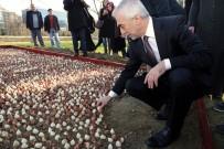 LALE SOĞANI - Kağıthane'de 15 Temmuz Şehitleri Anısına 15 Bin Çiçek