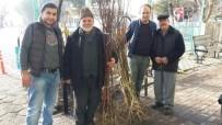 ÜÇPıNAR - Meyve Fidanları Nilüfer Belediyesi'nden