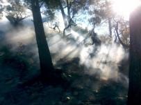Milas'ta Yangına Vatandaşlar Müdahale Etti