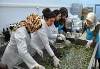 GIDA MÜHENDİSLİĞİ - NEÜ Gıda Mühendisliği Bölümü Zeytinyağı Üretmeye Başladı