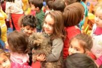SOKAK HAYVANI - Sokak Hayvanları Sahiplendirmede Büyük Başarı
