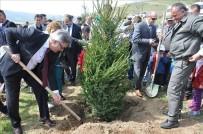 BOĞAZKÖY - Yıl Başında Ağaç Kesme Fidan Dik