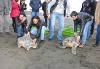 DENİZ KAPLUMBAĞALARI - 'Fırat' Ve 'Obüs' Akdeniz'e Bırakıldı